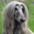 Group logo of Afghan Hound Dog